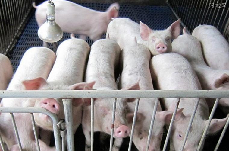 猪价开启下行模式