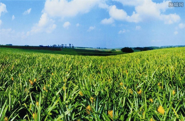 优化农业生产布局
