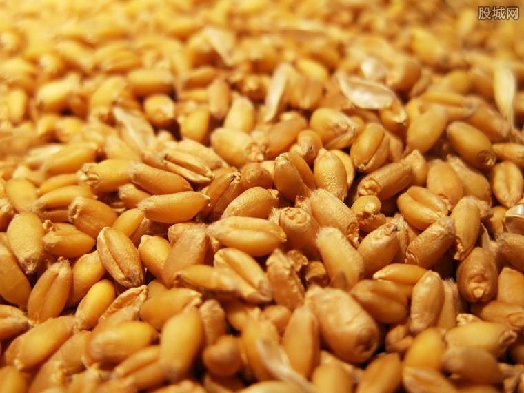 玉米价格波动成新常态