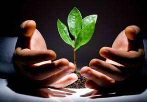 环境保护税法实施新条例明年起实施