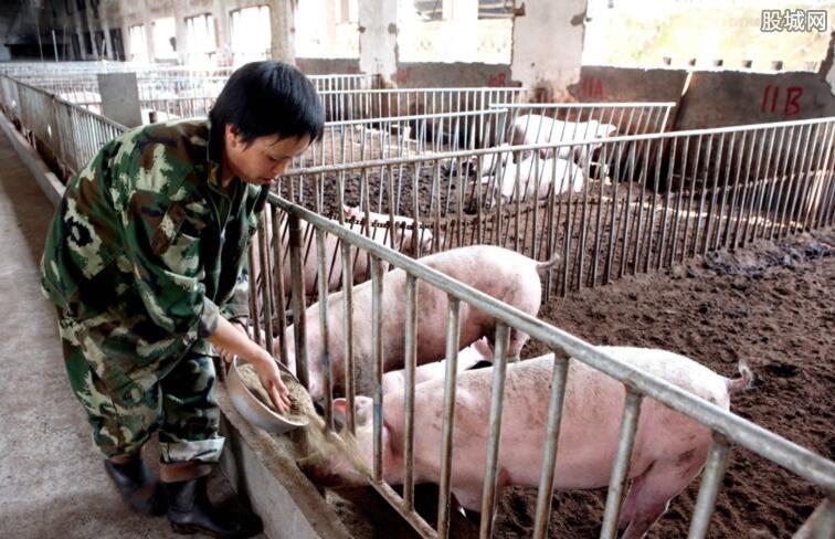 全国生猪价格大面积上涨