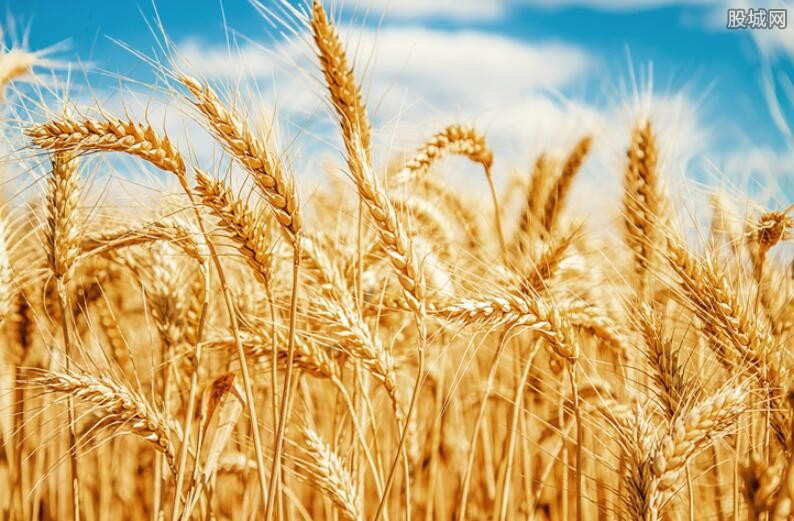 农业板块迎政策蜜月期