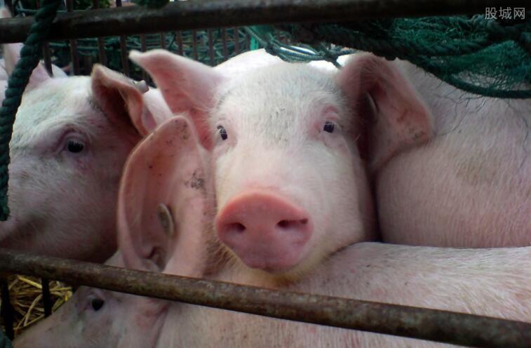 猪肉价格开始持续回暖