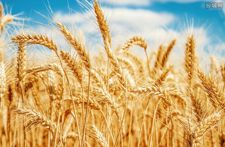 小麦期价大幅上涨