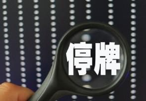 长信科技停牌 安徽国资拟战略入股长信