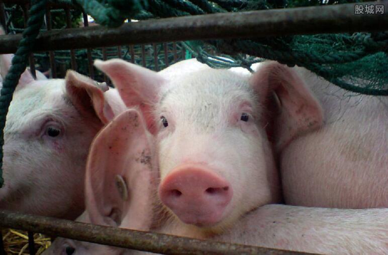 唐人神猪用饲料排查