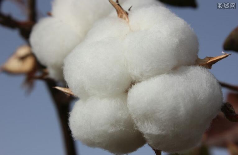 促进棉花产业提质增效