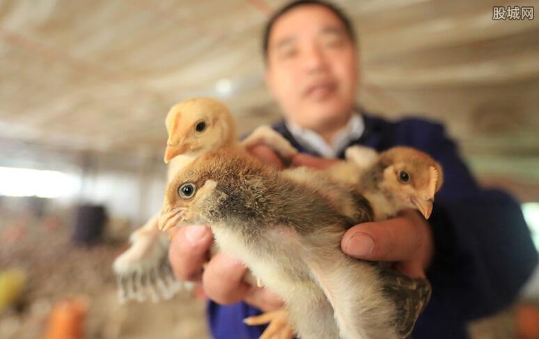 雞產業概念股跌幅擴大 2019年雞產業概念股一覽