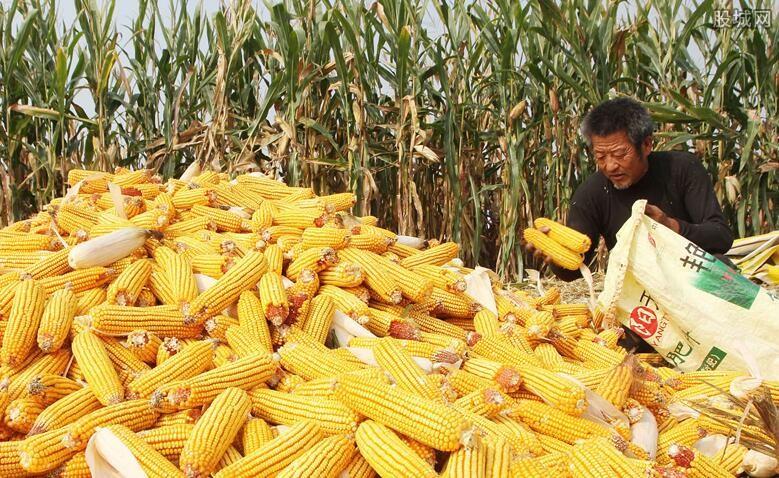 2020年玉米价格预测