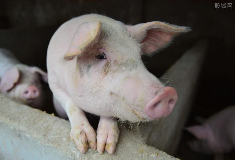 生猪养殖概念股