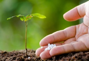 化肥概念股异动走强 凯龙股份股价大涨超5%