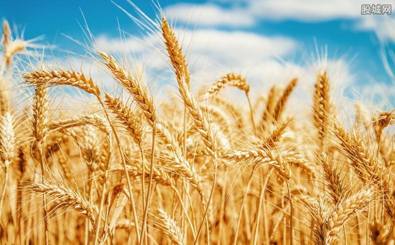 小麦概念股早盘大跌 丰乐种业股价下跌超过5%