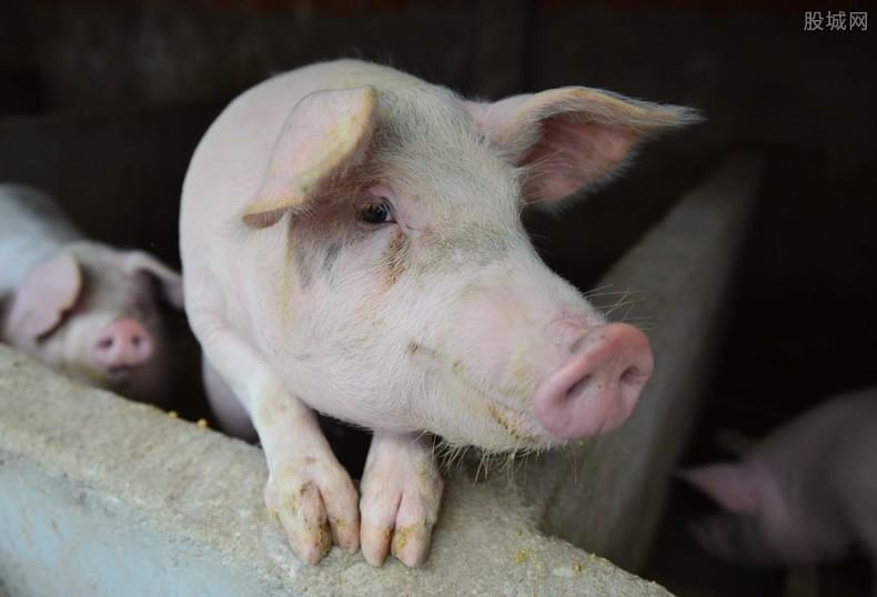 猪肉概念股走势