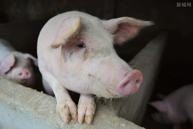 生猪养殖板块