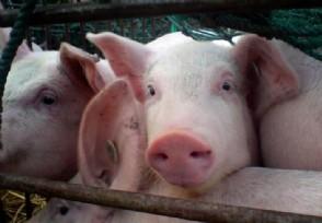 下半年猪肉价格将稳步回落 A股养猪上市公司有哪些