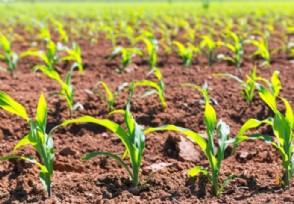 农业种植板块早盘走高荃银高科股价上涨逾6%