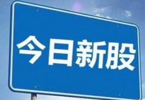 上海凯鑫今日申购单一账户申购上限15500股