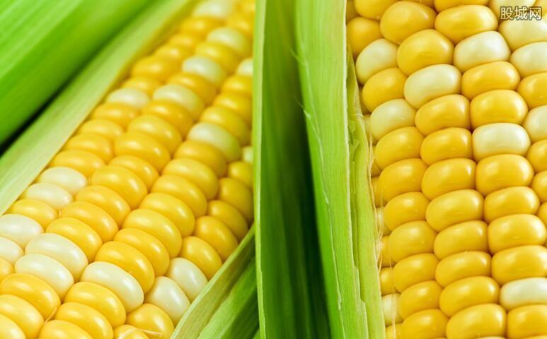 玉米价格每吨涨千元 A股玉米相关上市公司有哪些?