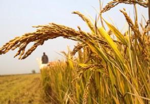 农业龙头股有哪些相关个股今日行情如何?