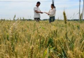 农业种植板块午后大涨宏辉果蔬涨停报价13.39元